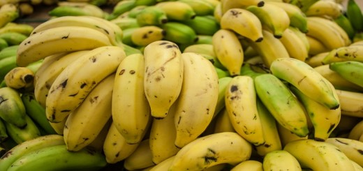 Cavendish_banana_from_Maracaibo
